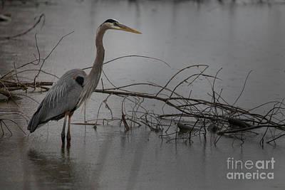 Photograph - Heron by Reva Dow