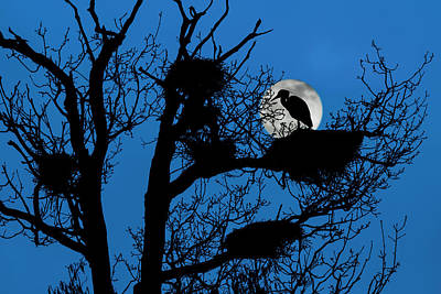 Photograph - Heron Rookery At Full Moon by Arterra Picture Library