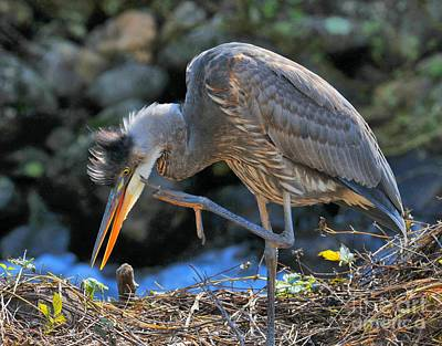 Photograph - Heron Scratch by Debbie Stahre