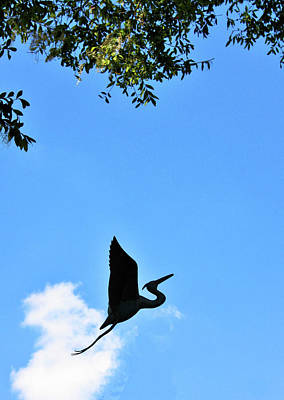 Photograph - Heron Silhouette by Kristin Elmquist