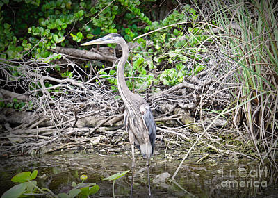 Photograph - Heron Stand by Judy Kay