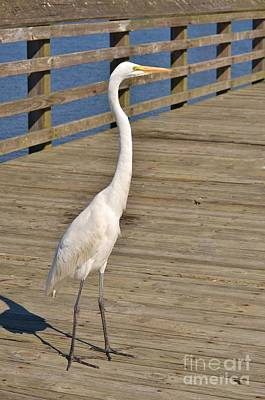 Photograph - Heron Standing Proud - 1 by Bob Sample