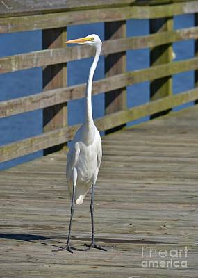 Photograph - Heron Standing Proud - 2 by Bob Sample