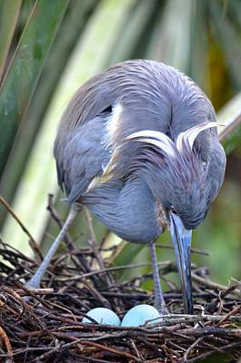 Photograph - Heron Strengthening Her Nest by Richard Bryce and Family