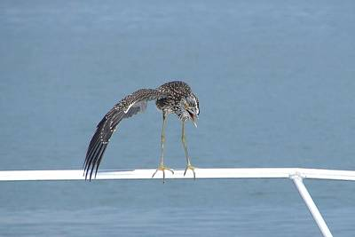 Heron Stretching Art Print