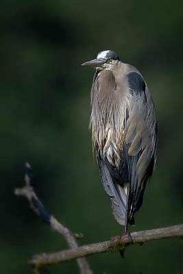 Photograph - Heron Sunrise by Craig Strand