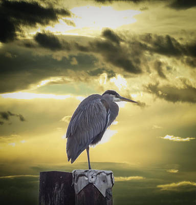 Photograph - Heron At Sunrise by Marilyn Wilson