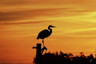 Photograph - Heron Sunrise by Rick Lawler