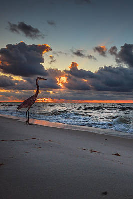 Photograph - Heron Sunrise Vertical by Michael Thomas