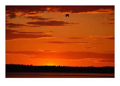 Heron Sunset Art Print by J D Banks