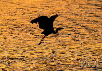 Photograph - Heron Sunset by Mike Dawson