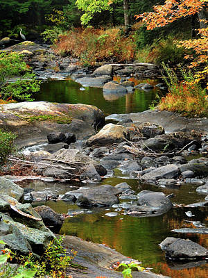 Photograph - Heron Takes The Stream by Nancy Griswold