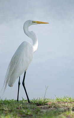 Photograph - Heron  by Ted Petrovits III