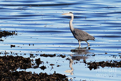 Photograph - Heron by Terri Waters
