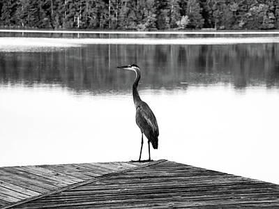Digital Art - Heron The Dock Of The Bay by Kathleen Illes
