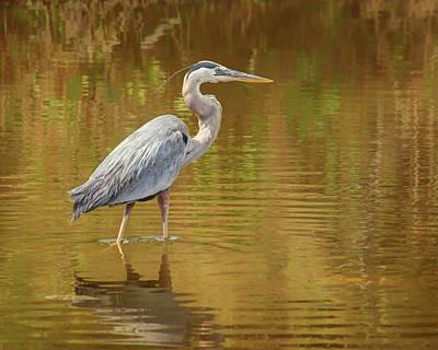 Photograph - Heron - Wading by Nikolyn McDonald