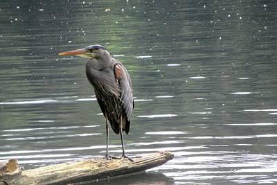 Photograph - Heron Watches Me From His Log by Karen Molenaar Terrell