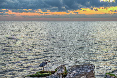 Photograph - Heron Watching by David Zanzinger