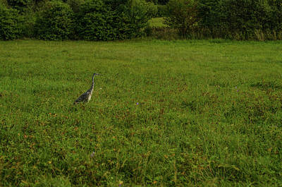 Photograph - Heron Watching Me by Miguel Winterpacht