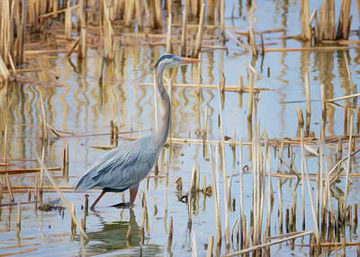 Photograph - Heron - Wetlands  by Nikolyn McDonald