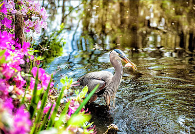 Photograph - Heron With Fish by Cathie Crow
