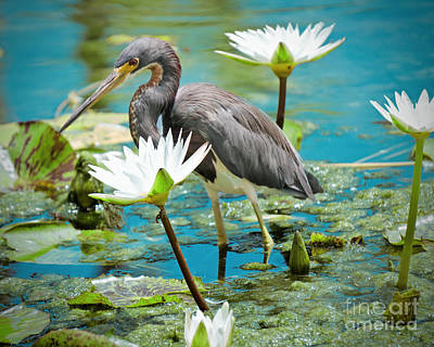 Heron With Water Lillies Art Print