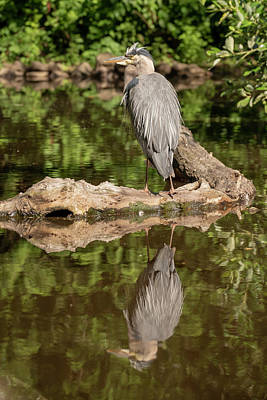 Photograph - Heron X 2 by Ross G Strachan