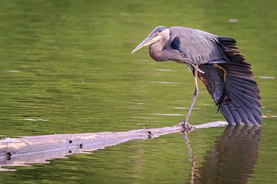 Photograph - Heron Yoga by Windy Corduroy