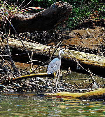 Photograph - Herons 2 by Ron Kandt