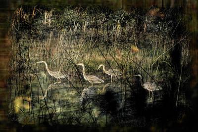 Riverstone Gallery Photograph - Herons by Allyson Schwartz