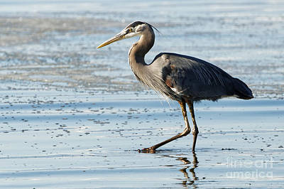 Photograph - Herons Beach Three by Sue Harper