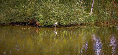 Photograph - Heron's Dream #g7 by Leif Sohlman