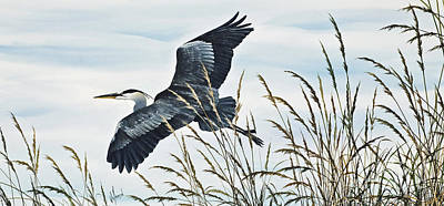 Heron Painting - Herons Flight by James Williamson