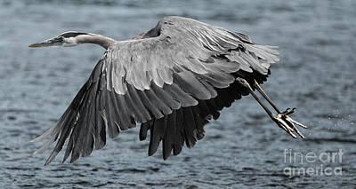 Traditional Bells - Herons Flight by Sue Harper