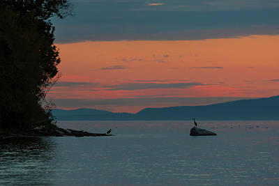 Photograph - Herons In The Distant At Semiahmoo Bay At Dusk by David Gn