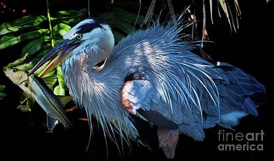 Photograph - Heron's Lunch by Pamela Blizzard