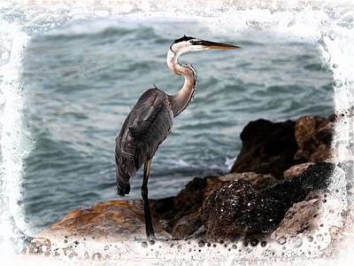Photograph - Heron's Ocean Rocks by Barbara Chichester