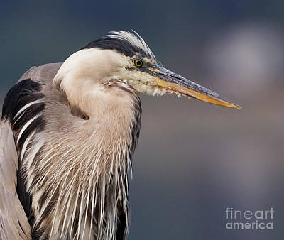 Photograph - Herons Pause by Sue Harper