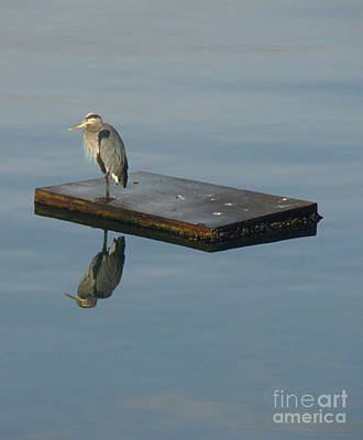 Photograph - Heron's Reflection by Lydia L Kramer