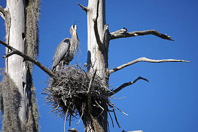 Photograph - Heron's Roost by Laurie Perry