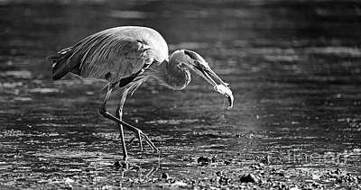 Photograph - Herons Triumphant Walk by Sue Harper
