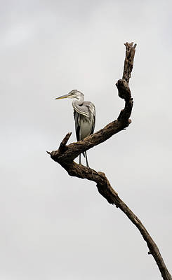 Photograph - Heron's Viewpoint by Roger Lever