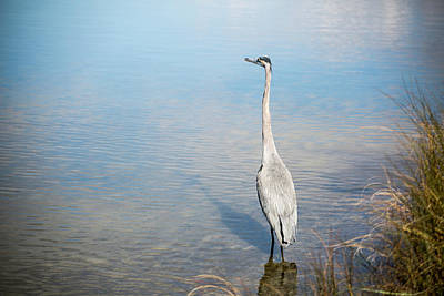 Photograph - Heron's Watch by Gwen Vann-Horn