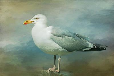 Photograph - Herring Gull by Cindi Ressler