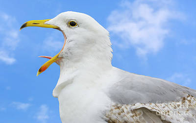 Seagulls Photograph - Big Mouth Gull by Geoff Smith