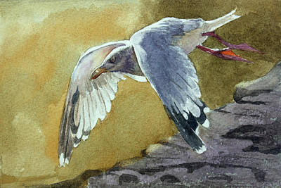 Painting - Herring Gull by Kris Parins