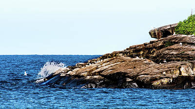Marquette Wall Art - Photograph - Herring Gull Picnic by Onyonet  Photo Studios