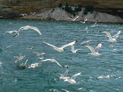 Photograph - Herring Gulls At Pictured Rocks by Keith Stokes