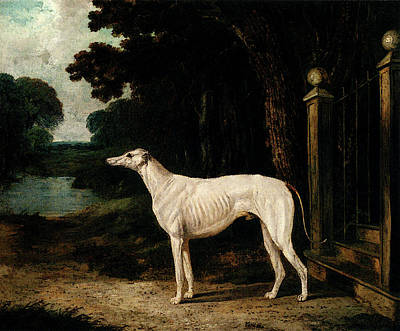 Herring John Frederick Vandeau A White Greyhound Art Print