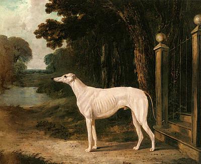 Herring Snr John Frederick Vandeau A White Greyhound Art Print by John Frederick Herring Snr